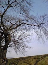 Image954