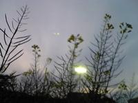 Image348